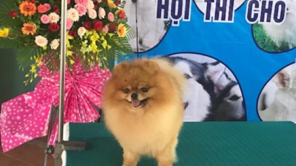 Vĩnh Long lần đầu tiên tổ chức hội thi 'hoa hậu' chó