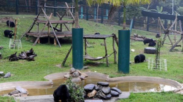 Trung tâm cứu hộ gấu lớn nhất Việt Nam thuộc tỉnh nào?