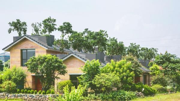 Độc nhất vô nhị: Ngây ngất trước vườn bưởi xanh tươi độc đáo trên mái nhà