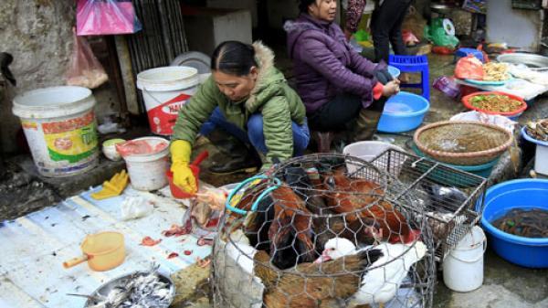 Vĩnh Phúc: Giết mổ gia cầm phải đăng ký môi trường với huyện xã