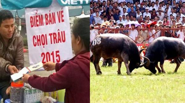 Vĩnh Phúc: Cấm các hoạt động mua bán vé tại lễ hội chọi trâu Hải Lựu