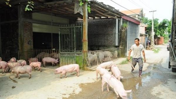 Vĩnh Phúc thanh tra tình trạng ô nhiễm tại các khu chăn nuôi tự phát