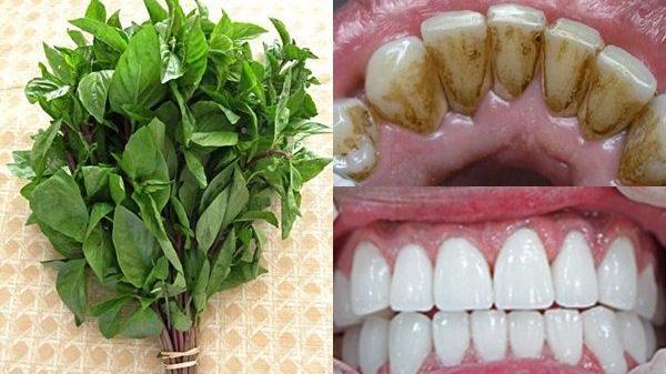 Giật mình loại rau chưa đến 2 nghìn 1 mớ mà đánh sạch mảng bám, ố vàng, cao răng trong 1 nốt nhạc