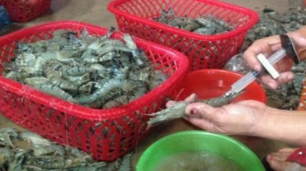 Vĩnh Phúc: Lộ diện các đối tượng bơm tạp chất vào tôm bán cho người tiêu dùng