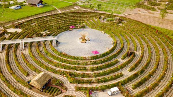 Ngay gần Vĩnh Phúc, có một mê cung hoa hồng khổng lồ đẹp đến quên lối về