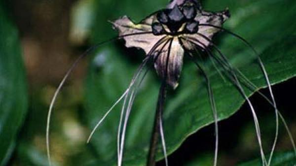Vĩnh Phúc: Khám phá các loài cây quý hiếm