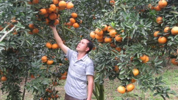 Hà Giang: Bảo hộ các sản phẩm nông nghiệp thế mạnh bằng Chỉ dẫn địa lý