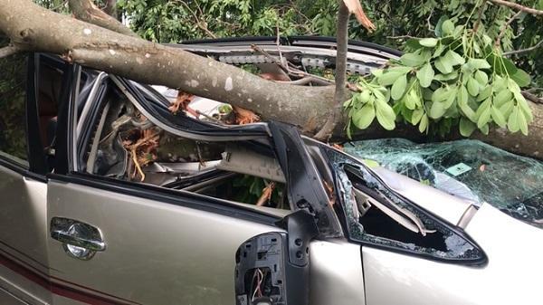 """Tài xế Vĩnh Phúc lái ô tô đang chạy bị cây xanh bất ngờ ngã đè bẹp """"nát bét"""" trên đường"""