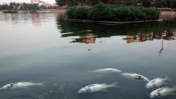 Hà Nội: Đã tìm ra nguyên nhân cá nổi c.h.ế.t bất thường ở hồ Hoàng Cầu