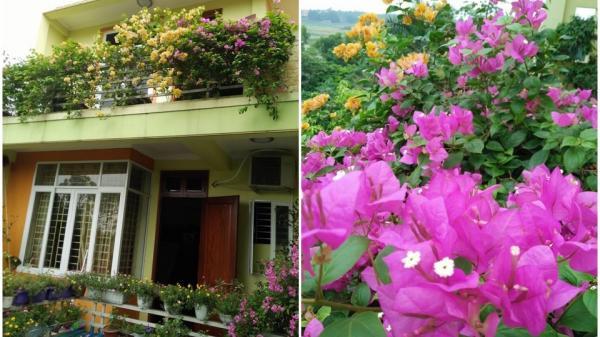 Ngôi nhà bốn mùa hoa nở ai đi qua cũng dừng chân ngắm nhìn của cô giáo ở Vĩnh Phúc