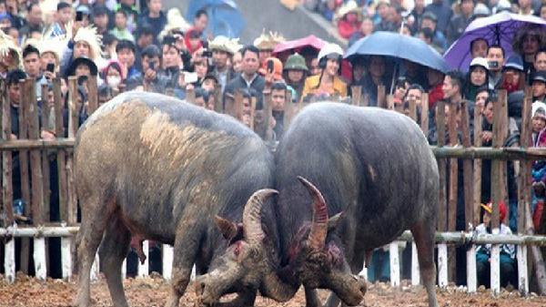 Bộ VHTTDL sẽ kiểm tra công tác quản lý và tổ chức lễ hội trên địa bàn tỉnh Vĩnh Phúc