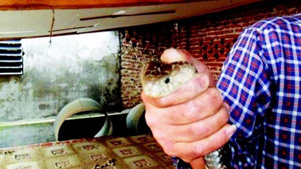 """""""Đứng tim"""" khi ghé thăm làng tỷ phú nuôi loài bò sát """"lạnh lưng"""" tại Vĩnh Phúc"""