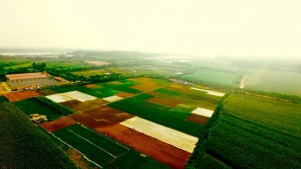 """Về Yên Lạc - Vĩnh Phúc, """"choáng ngợp"""" trước công nghệ... trồng rau sạch"""