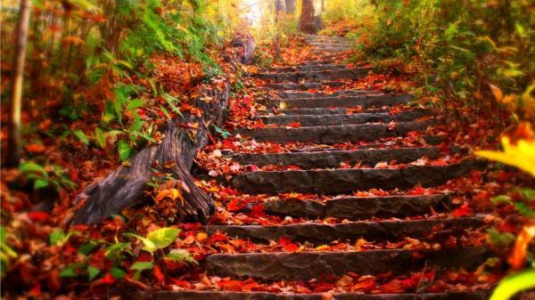 Rủ nhau lên Vĩnh Phúc và 4 địa điểm cực HOT này để ngắm lá phong đẹp như trời Tây