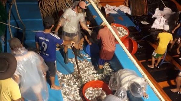 Phú Yên: Chuyện về ngư dân 'Tàu 67' ba chuyến vươn khơi, thu 4 tỷ đồng
