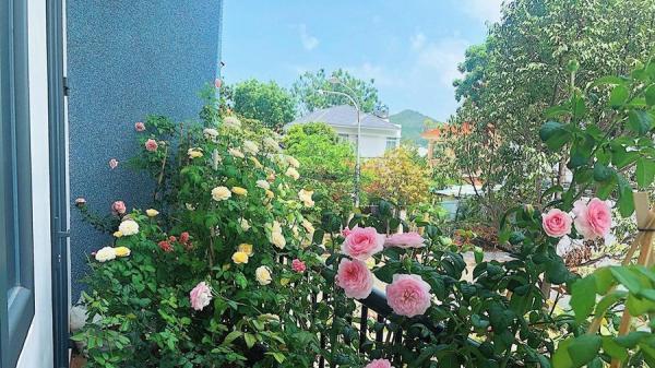 Góc ban công nhỏ xinh yêu rạng rỡ với hoa hồng của cô nàng 9X ở Vũng Tàu