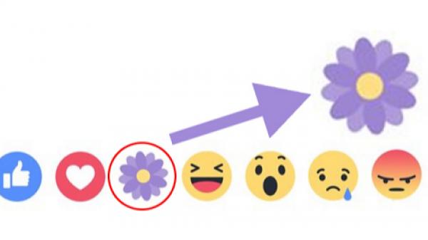 Tranh cãi xung quanh ý nghĩa biểu tượng hoa tím của Facebook