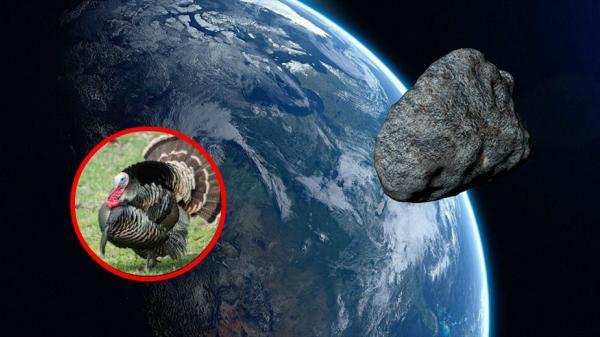Một con gà tây lao thẳng vào Trái đất với tốc độ gần 300.000km/giây... điều gì sẽ xảy ra?