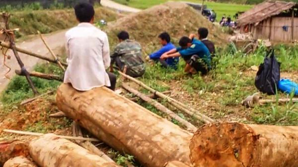 Yên Bái: Bản án dành cho kẻ vận chuyển lâm sản trái phép