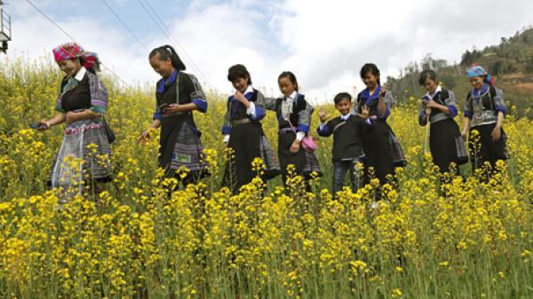 Ngay giữa lòng Yên Bái cũng có một cánh đồng hoa cải vàng đẹp quên lối về