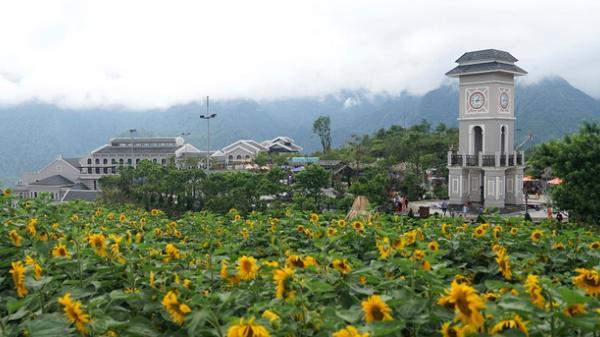Rạng rỡ check in giữa cánh đồng hoa hướng dương ở ngay gần Yên Bái