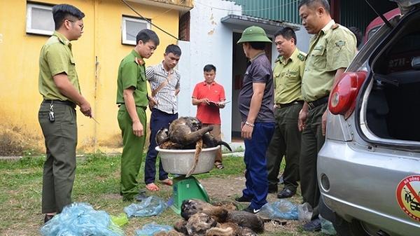 Thu giữ hàng trăm kg động vật hoang dã