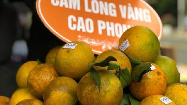 Loạn cam Cao Phong giá rẻ, nhưng cam Cao Phong xịn bán tận vườn giá 19.000 đồng/kg