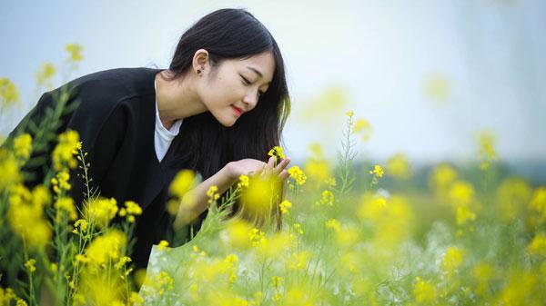 Sắc vàng hoa cải giữa lòng thành phố