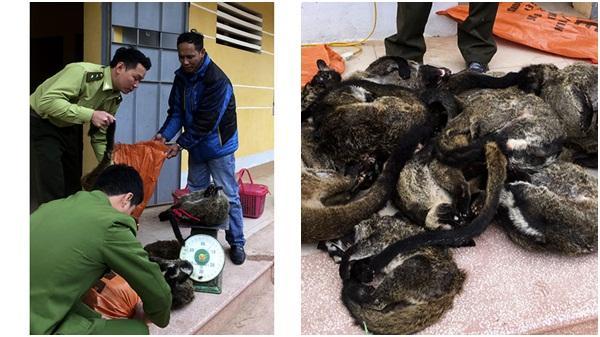 Điện Biên: Xử phạt 40 triệu đồng, thu giữ 70kg động vật hoang dã