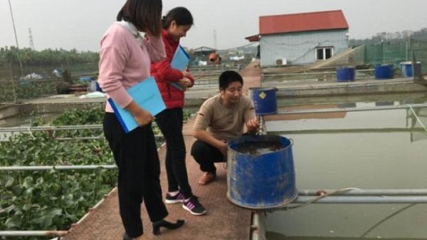 Hải Dương: Dân khốn khó vì mô hình nuôi cá chép giòn