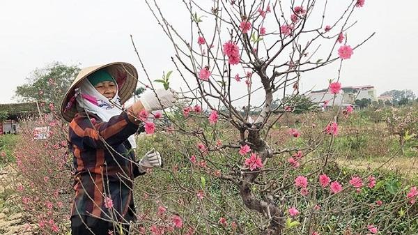 Nhộn nhịp vùng hoa Tết Tân Hưng