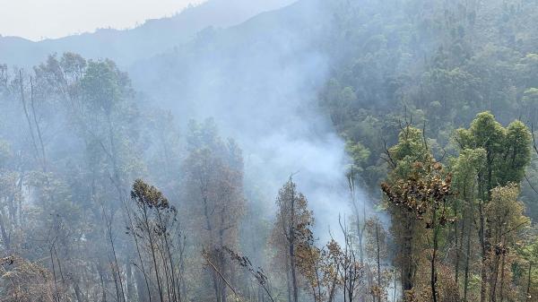 Rừng ở Cà Mau bị cháy nghiêm trọng do người dân trộm mật ong
