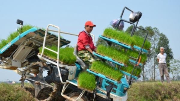 Gặp người đàn ông Hưng Yên trồng lúa nhiều nhất miền Bắc: 3 cái sổ đỏ dưới ruộng