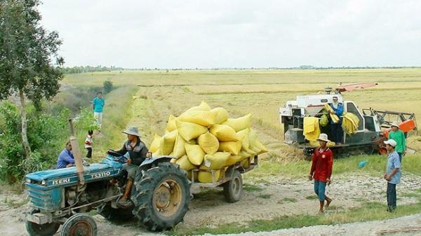 Kiên Giang được mùa, được giá gạo