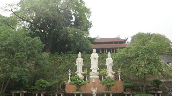 Cây thị cổ nghìn năm bên chùa thiêng huyền bí lạ thường ở Phú Thọ