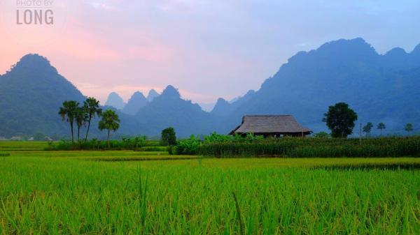 Yên Bái: Mùa lúa vàng đẹp ngẩn ngơ ở thung lũng Lâm Thượng
