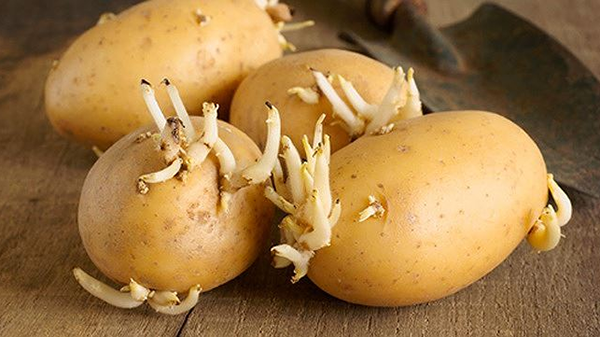 6 thực phẩm có độ c chất bạn nên cẩn trọng khi chế biến