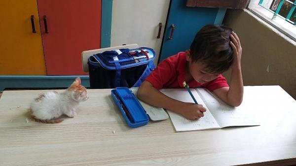 Hà Nam: Học sinh lớp 1 mang mèo cưng đến lớp và hành động bất ngờ của cô giáo