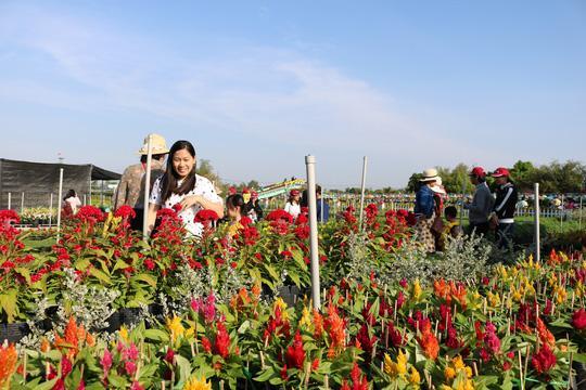 Du khách thích thú với các loài hoa ở Sa Đéc