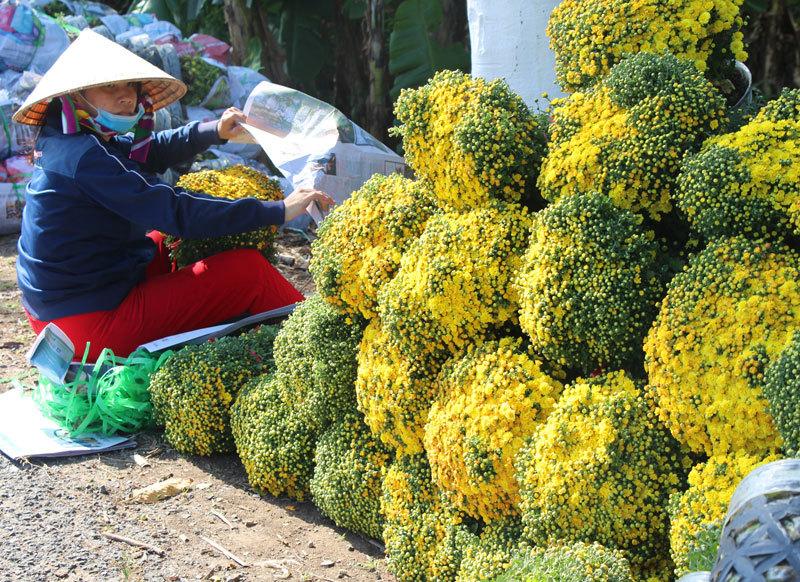 Làng hoa Sa Đéc có diện tích gần 600 ha và trên 2.300 hộ trồng.Nơi đây được mệnh danh là xứ sở của các loài hoa