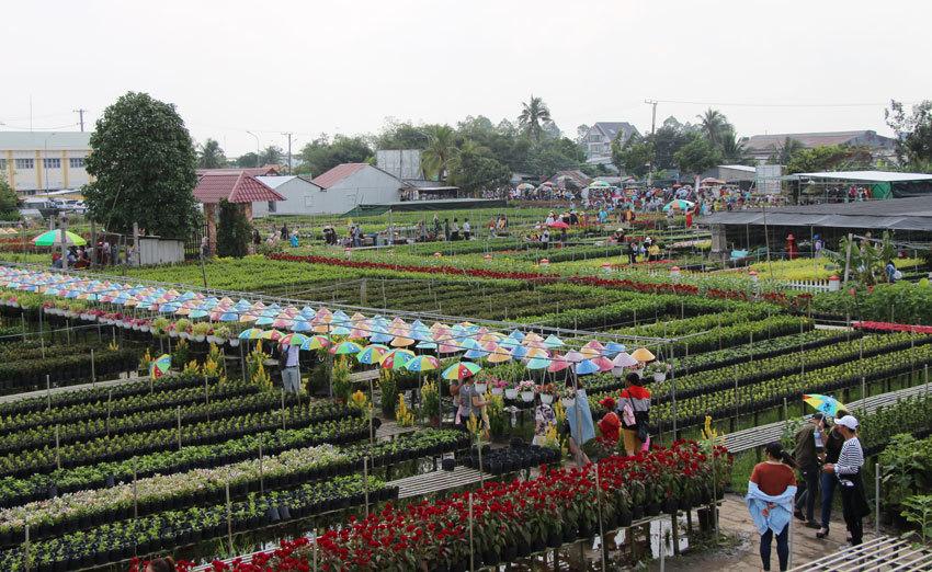 Điểm mới của làng hoa Sa Đéc so với các năm trước là một số chủ vườn đã cho đầu tư nhiều tiểu cảnh, công trình, trong số đó cóđài ngắm vườn hoa cao 18 m với vốn đầu tư khoảng 1 tỉ đồng. Nhiều nơi bắt đầu thu vé vào tham quan vườn hoa thay vì miễn phí như trước đây