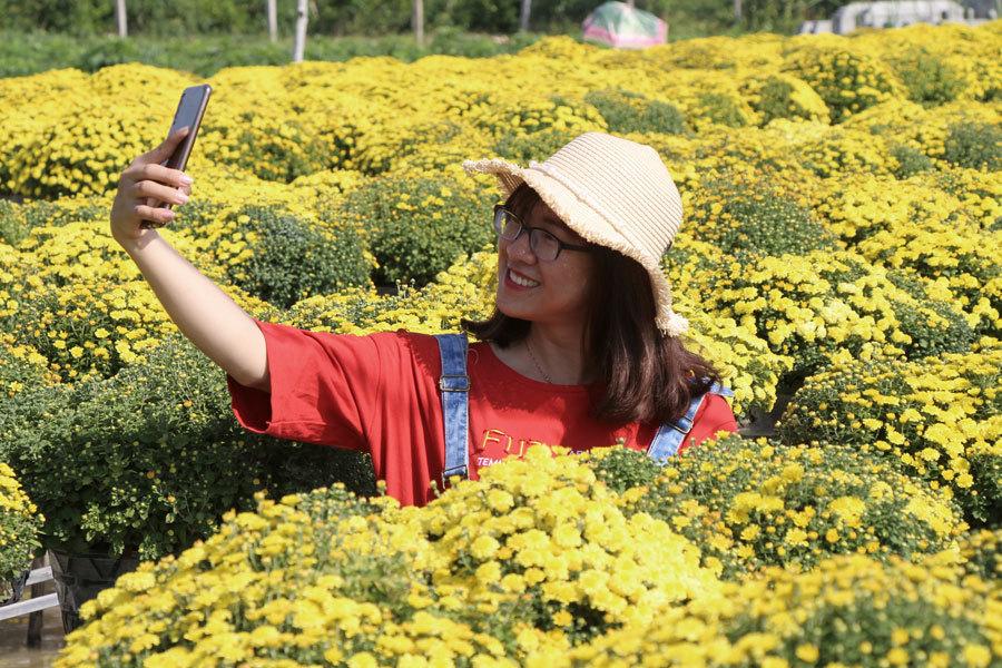 Vườn cúc mâm xôi vàng rực luôn là nơi thu hút nhiều du khách, làm cho không khí làng hoathêmnhộn nhịp