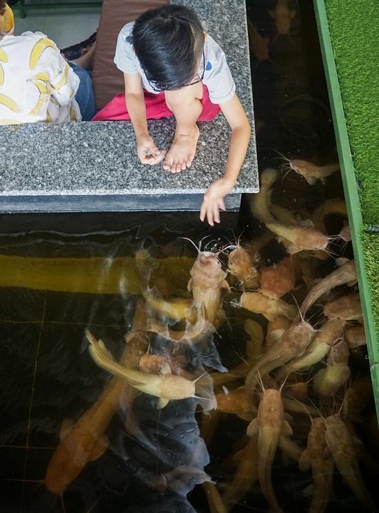 Bên cạnh những con cá koi sặc sỡ, gần 300 chú cá trê hồng khiến nhiều khách thích thú. Loài cá trê này được nhập ở Cà Mau với giá 200.000 đồng một kg, mỗi con nặng trung bình 1 - 3 kg, có khả năng sống tốt ở nhiều môi trường.