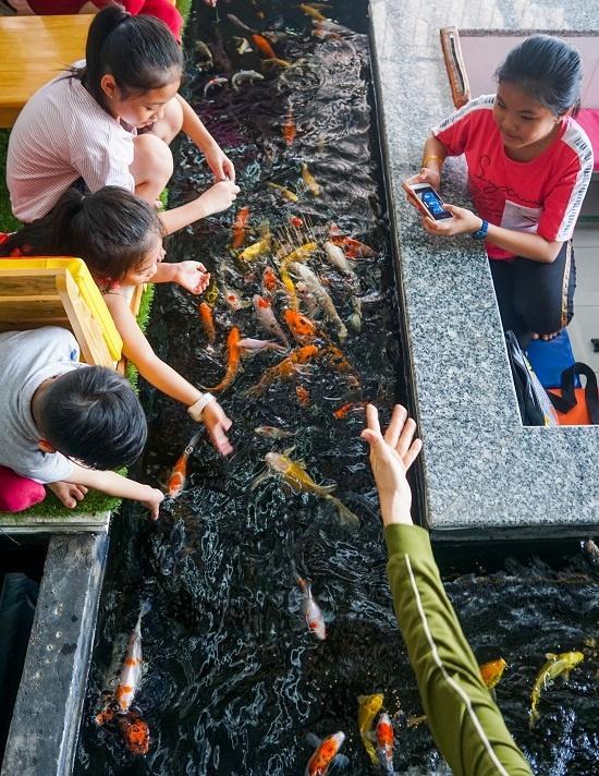Tại quán bán sẵn thức ăn để khách thả cho cá ăn.