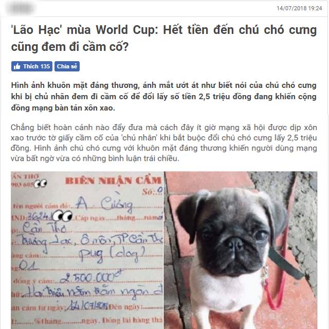 Chú chó từng xuất hiện trên 1 trang tin tức trước đây 1 năm.