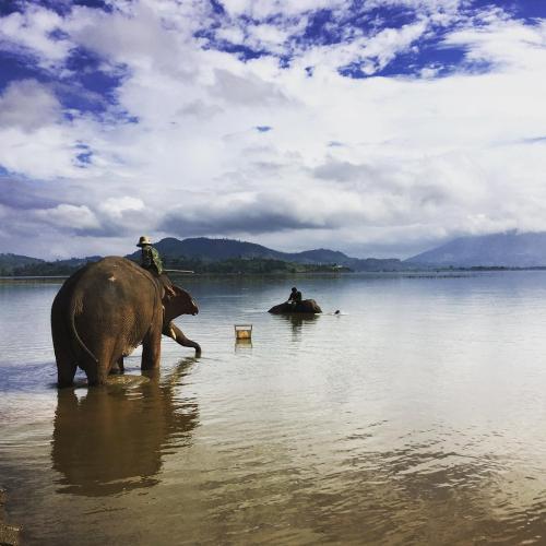 Bức tranh dung dị ở hồ Lắk - Ảnh: @freddiesherwood