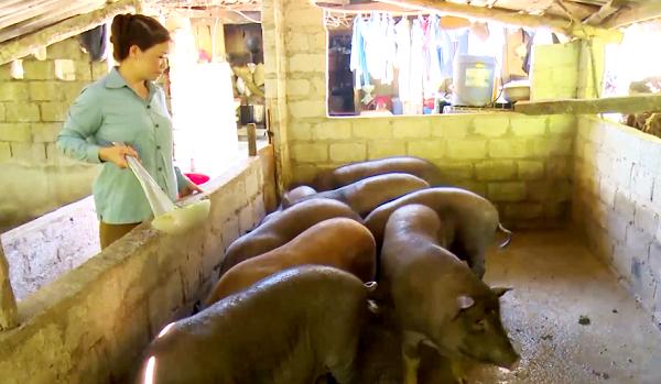 Với số tiền tích góp sau khi xuất khẩu lao động trở về, chị Vọng đã đầu tư phát triển chăn nuôi trồng trọt có hiệu quả