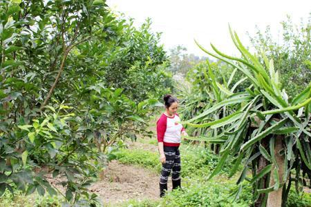 Vườn cây ăn quả của gia đình chị Hoa