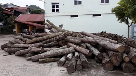 Gỗ khai thác trái phép bị thu giữ tại Hạt Kiểm lâm huyện Na Rì.