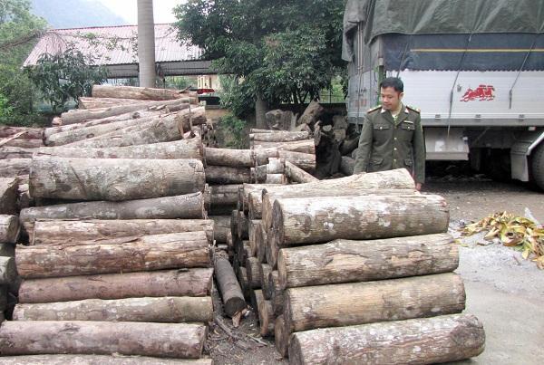 Khối lượng gỗ vi phạm đã bị lực lượng chức năng thu giữ.